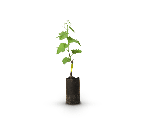 Plantas-activas-bolsa-viveros