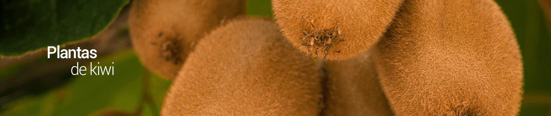 kiwi-los-vinedos-PERU-1